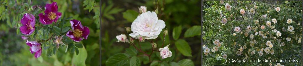 Single Cherry, Marie Pavie et Frühlingsduft